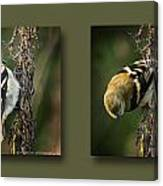 Goldfinch Collage Canvas Print