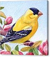 Goldfinch In A Crab Apple Tree Canvas Print