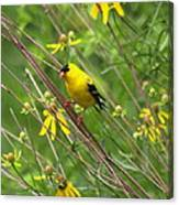Goldfinch In The Flowers Canvas Print