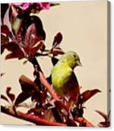 Goldfinch In Tree 031015a Canvas Print