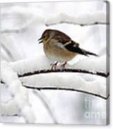 Goldfinch On Snowy Branches Canvas Print