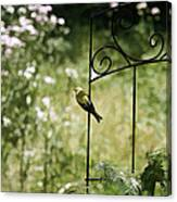 Goldfinch On The Lookout -19 Canvas Print