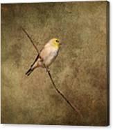 Goldfinch Portrait Canvas Print