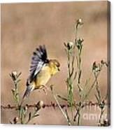 Goldfinch Quest 2 Canvas Print