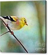 Goldfinch With Rosy Shoulder - Digital Paint IIi Canvas Print