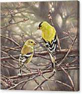 Goldfinches In The Rain Canvas Print