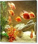 Goldfish At The Chinese Restaurant  Canvas Print