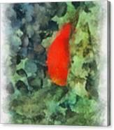 Goldfish Photo Art 04 Canvas Print