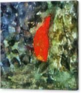 Goldfish Photo Art 05 Canvas Print