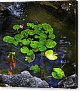 Goldfish With Lily Pads Canvas Print