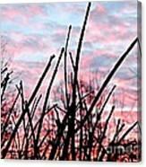 Good Morning Sunrise Canvas Print