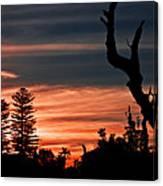 Good Night Trees Canvas Print
