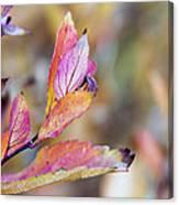 Goodbye To Autumn Canvas Print