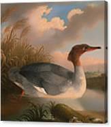 Goosander  Canvas Print