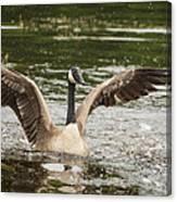 Goose Action Canvas Print
