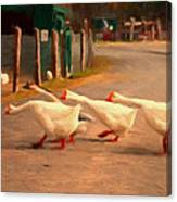 Goose Crossing Canvas Print