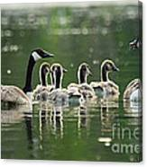 Goose Family Canvas Print