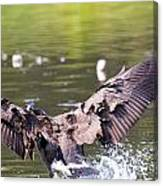 Goose Landing II Canvas Print