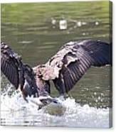 Goose Landing Iv Canvas Print