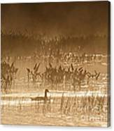Goose Of The Mist Canvas Print