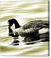 Goose Reflecting In The Water Canvas Print