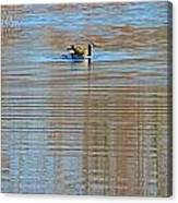 Goose Ripples Canvas Print