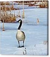 Goose Standing Canvas Print