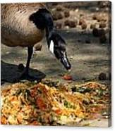 Goose Sticking Tongue Out Canvas Print