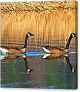 Goose Talk Too Canvas Print