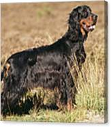 Gordon Setter Dog Canvas Print