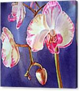 Gorgeous Orchid Canvas Print