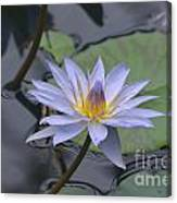 Gorgeous Pale Lavender Water Lily Canvas Print