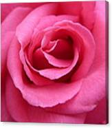 Gorgeous Pink Rose Canvas Print