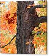 Gorgeous Tree Canvas Print