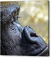 Gorilla Contemplating Canvas Print