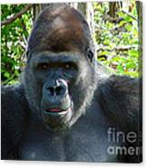Gorilla Headshot Canvas Print