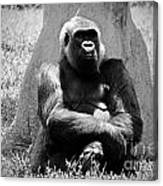 Gorilla In Solitude Canvas Print