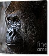 Gorilla In Thought Canvas Print
