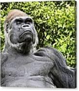 Gorilla Look Canvas Print