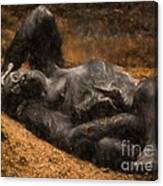 Gorilla - Painterly Canvas Print