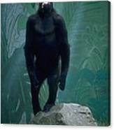 Gorilla Rock Canvas Print
