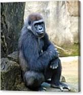 Gorilla Smile Canvas Print