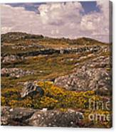 Gorse And Heather Canvas Print