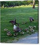 Gosling Daycare  Canvas Print