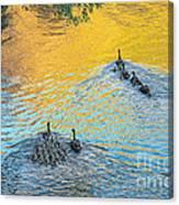 Goslings Morning Swim Canvas Print