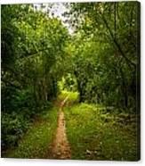 Gosnell Big Woods Trail Canvas Print