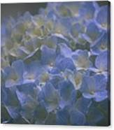 Got The Blues For You Canvas Print