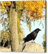 Three Ravens On A Gothic Graveyard Day Canvas Print