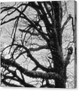 Gothic Oak Canvas Print