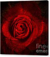 Gothic Red Rose Canvas Print